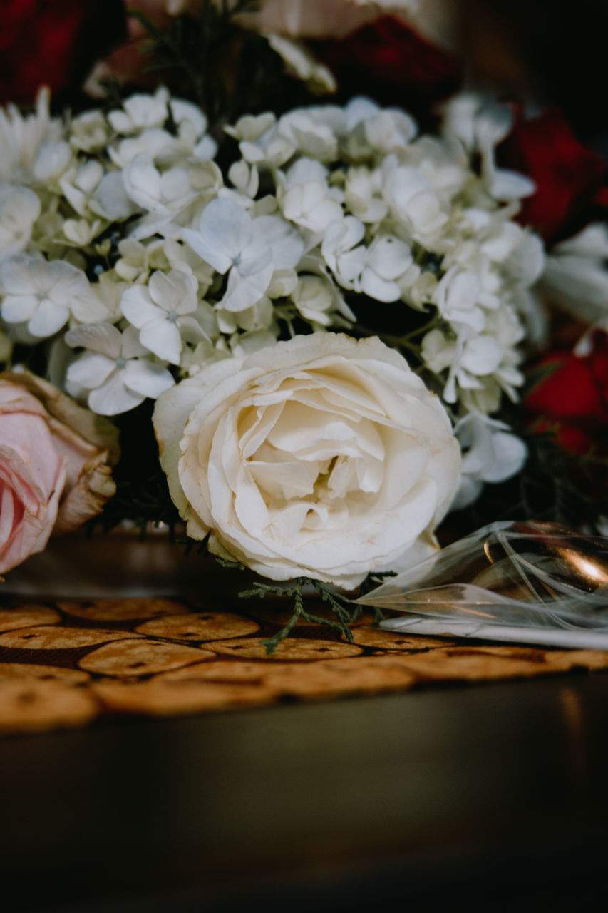 CLOSE-UP OF WHITE ROSE BOUQUET ON PLANT