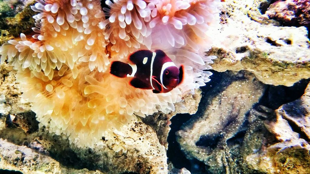 Bubble and clown Clownfish Saltwater Saltlife Anenome Bubble Bubbletip First Eyeem Photo Capture The Moment