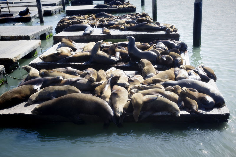 Animal Animal Wildlife Animals In The Wild Group Of Animals Large Group Of Animals Mammal Nature Pier Sea Seal Seal - Animal Seals On The Dock