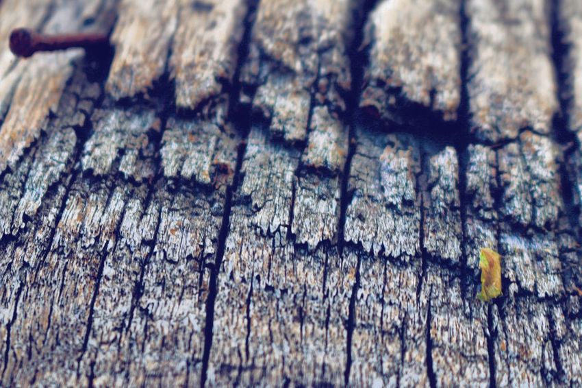 A photo of textured wood. Suitable for backgrounds and book/magazine features. Backgrounds Close-up Detail Focus On Foreground Full Frame Low Angle View Nature Outdoors Pattern Rough Selective Focus Textured  Tree Water Weathered Wood - Material