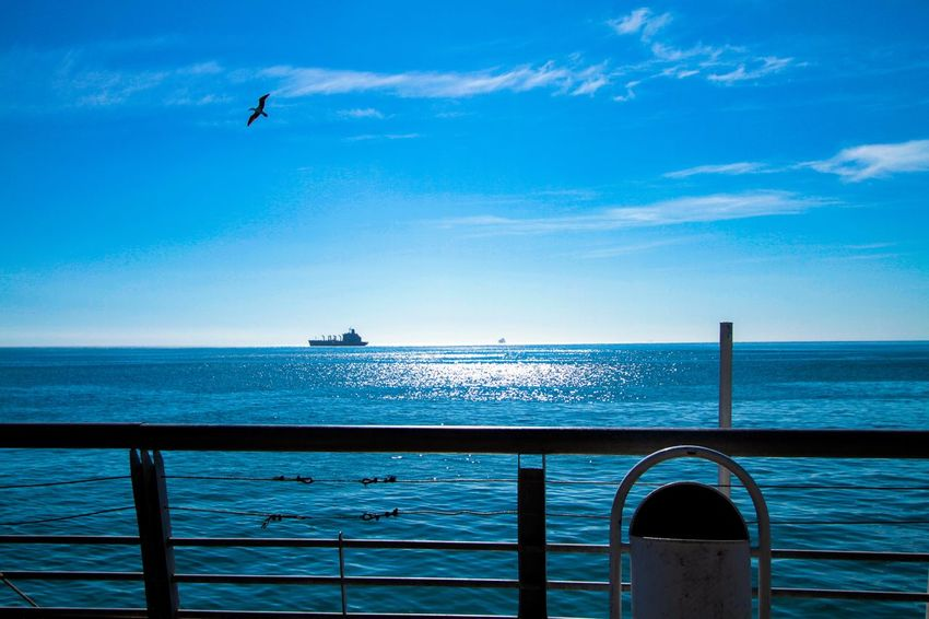 A Blue Horizon Water Sea Sky Beauty In Nature Flying Horizon Over Water Bird Scenics - Nature Nature Horizon Blue Day Tranquil Scene Summer In The City