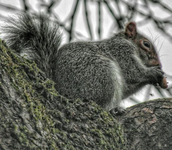 Yes I know. Another squirrel photograph I just love these little monsters Nature Eyeemphotography Creative Light And Shadow Color Photography Eyeem4photography HDR Popular Photos Showcase: December EyeEm Best Shots EyeEm Gallery EyeEm Masterclass Squirrels Nature Photography Wildlife Wildlife & Nature Animals In The Wild EyeEm Nature Lover Animals The Purist (no Edit, No Filter) No Edit/no Filter EyeEm Best Shots - No Edit Squirrels By Tony Bayliss