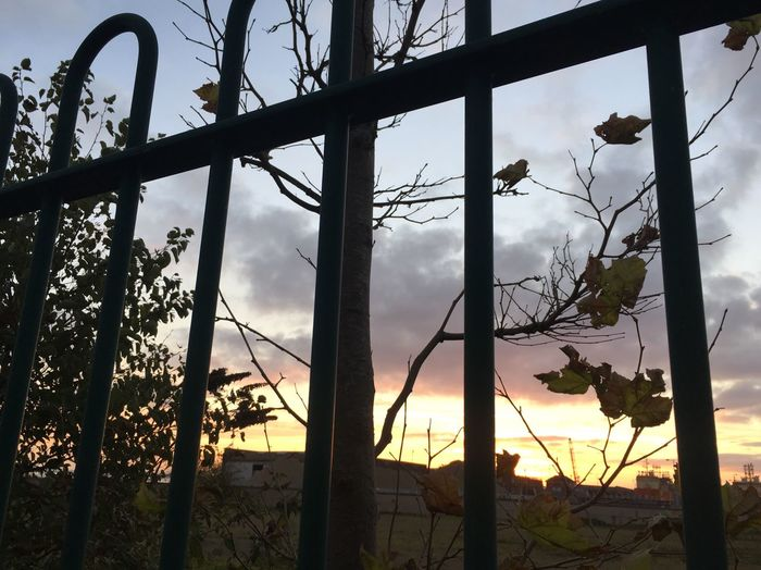 Fence Sunset Cloud - Sky Silhouette No People Nature Outdoors Winter Tree Hull City Of Culture 2017
