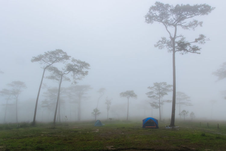 Adventure Beauty In Nature Camping Day Fog Grass Landscape Mist Nature No People Outdoors Scenics Sky Tent Tranquility Tree Tree Trunk