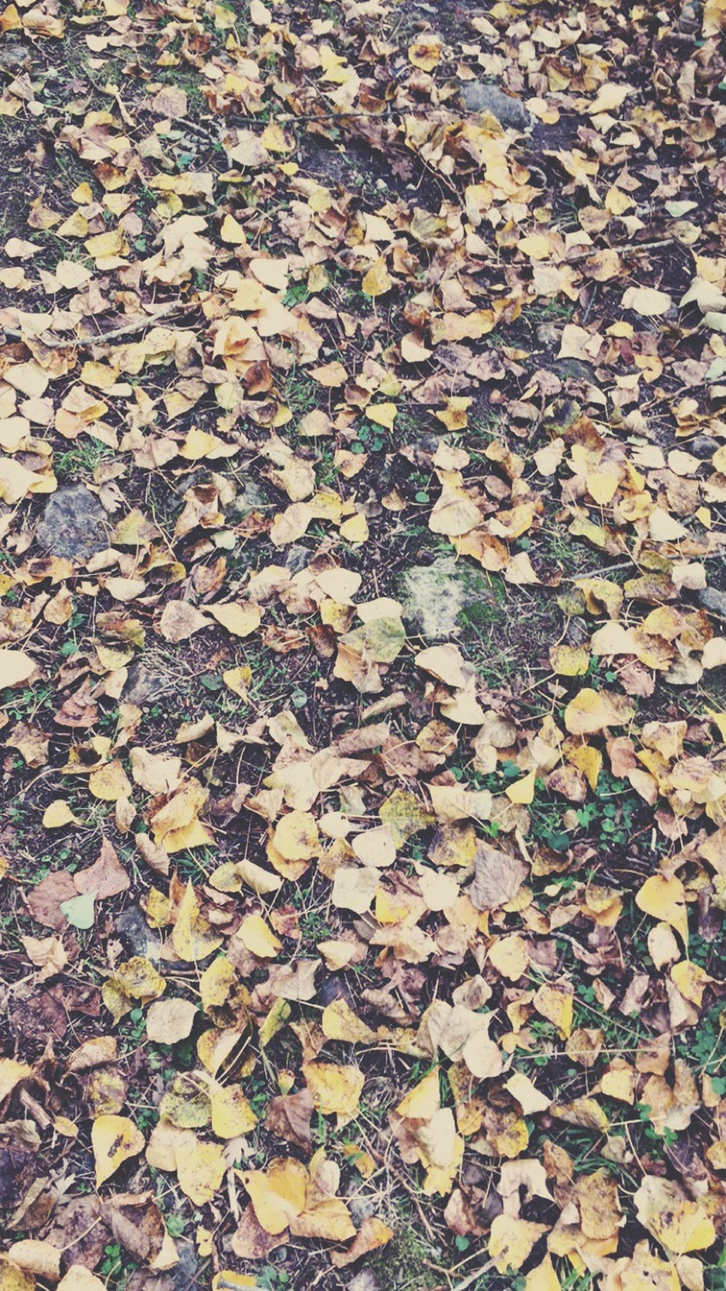 autumn, leaf, high angle view, change, full frame, dry, backgrounds, season, fallen, leaves, nature, abundance, day, outdoors, tranquility, stone - object, no people, field, textured, falling