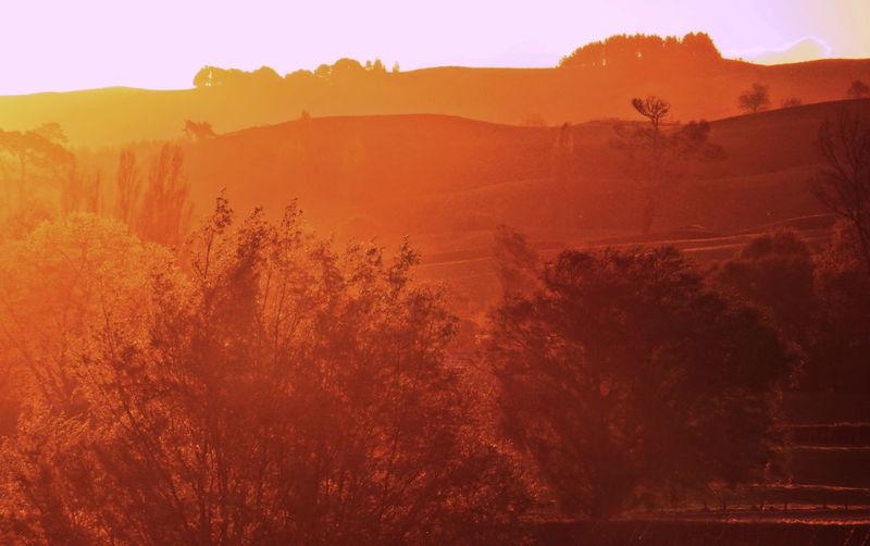 Sunset Glow New