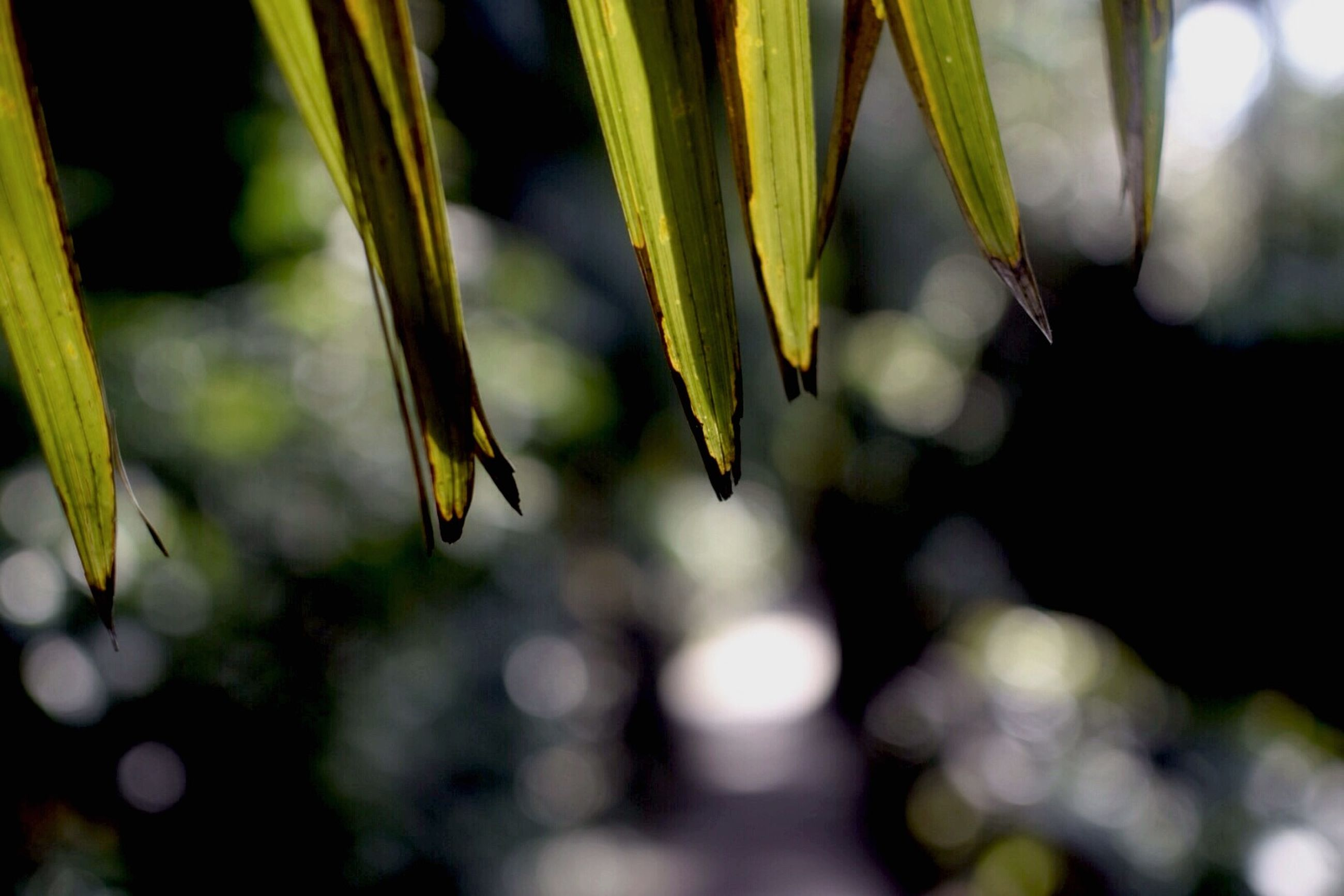 close-up, focus on foreground, growth, plant, leaf, selective focus, stem, nature, freshness, fragility, bud, beauty in nature, green color, beginnings, flower, new life, outdoors, day, twig, no people