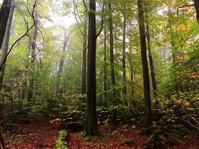 Herbstwald. Nature Forest Autumn Trees Fichtelgebirge