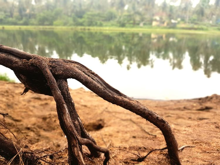 EyeEmNewHere Nature Water Outdoors Beauty In Nature The Great Outdoors - 2017 EyeEm Awards Nature_perfection Hands Of Nature Beauty In Nature Nature Photography Beauty Nature Nature Naturelovers Lakeside Lake View Lakeshore Roots Of Tree - Roots Of Life