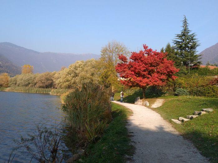 Tree Flower Sky Plant