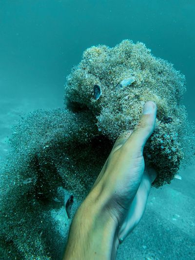 Cropped hand of man touching coral undersea