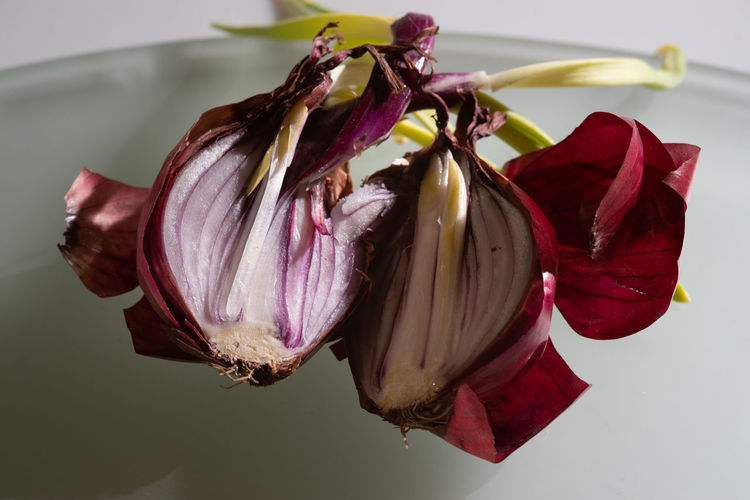 Useless Onion Onion Onions Vegetables Directly Above Vegetable Waste Beauty In Decay Flowering Plant Flower Petal Close-up Vulnerability  Beauty In Nature Fragility Plant Indoors  No People Nature Focus On Foreground Wilted Plant Red Studio Shot Dry Growth