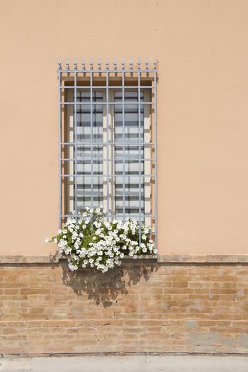 Flowers on window box