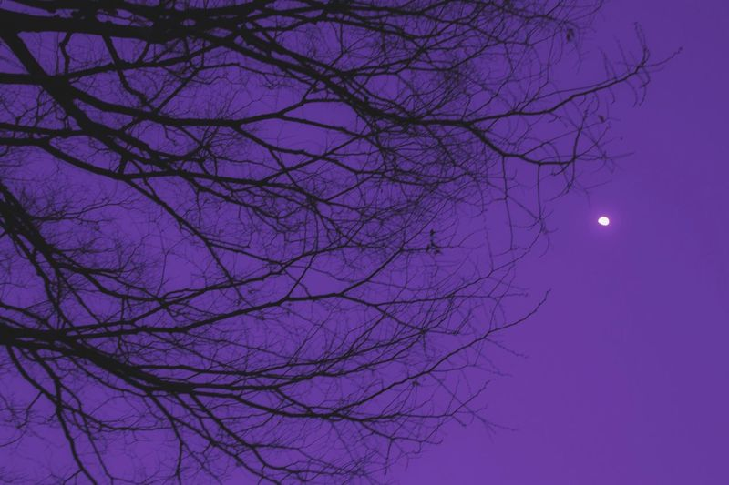 silence Moon Tree_collection  Hugging A Tree Pastel Silhouette Learn & Shoot: Layering Human Vs Nature Night View Skyporn Violet By Motorola