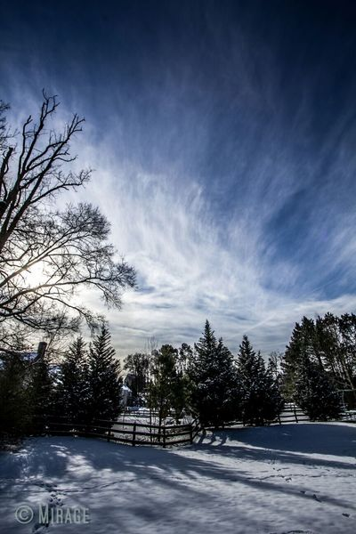 Winter White By CanvasPop Sky_collection My Dream Sky Frozen