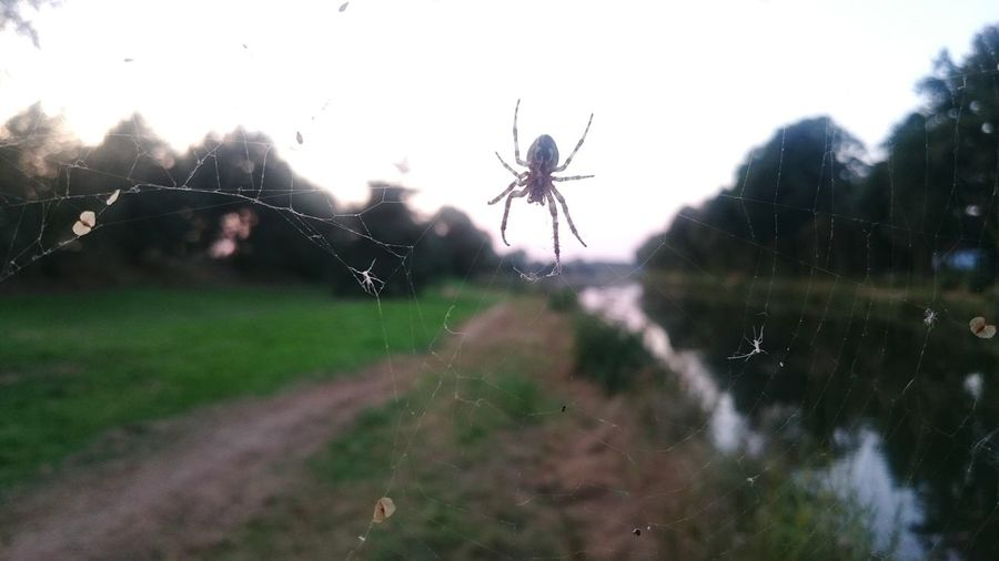 Spider Spiderweb Spinne Spinnennetz Kanal Nature Insect Animals In The Wild No People Nature Outdoors Focus On Foreground Grass Natur