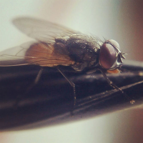 Macro Macro Photography Fly Ultraclose Mobile Camera Lens Macro .25mm Lens.