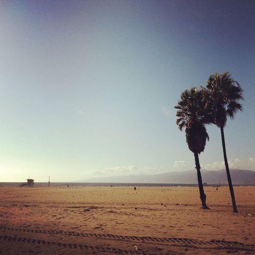 Walking around at Venice Beach Walk Walking Around