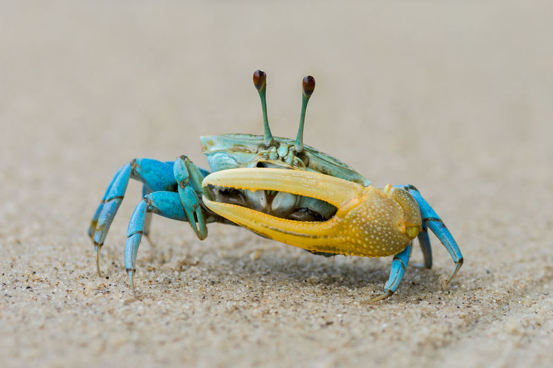 Close-up of insect on beach