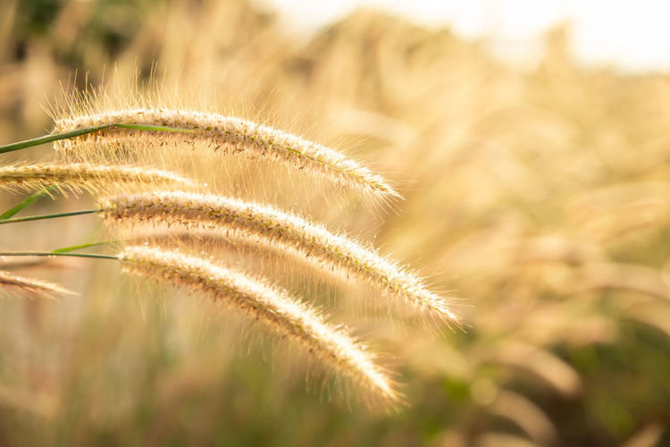 Background Flower Grass Field Flowers Sun Soft Nature Beautiful Sunset Summer Blur Blurred Light Sunlight Spring Landscape Meadow Golden White Beauty Sunrise Plant Season  Green Abstract Sunny Yellow Day Garden Lawn Environment Rural Color Lush Bright Fresh Floral Outdoor Colorful Beam Easter Morning Daisy Design Leaf Concept Springtime Foliage Hope