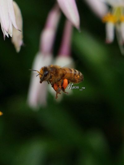 Busy Bee Streamzoofamily Nature EyeEm Best Shots EyeEm Nature Lover