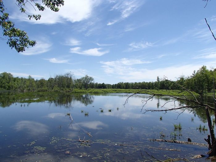 Parc national de Plaisance Water Lake Reflection Sky Tree Cloud - Sky Beauty In Nature Scenics - Nature Outdoors