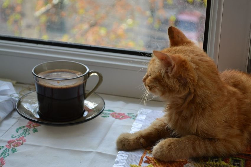 Рыж One Animal Pets Animal Themes No People Day ильичевск черноморск IlIchevsk Ukraine 💙💛 кот день Watching Домашний питомец