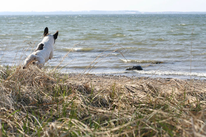 Awww So Cute <3 Bully Cute Dog  Dog In Action Dogs Französische Bulldogge  Frenchbulldog Hunde Nature Pets Nature_collection Ostsee Urlaub Sea Dog Vacation Sommergefühle Breathing Space Go Higher