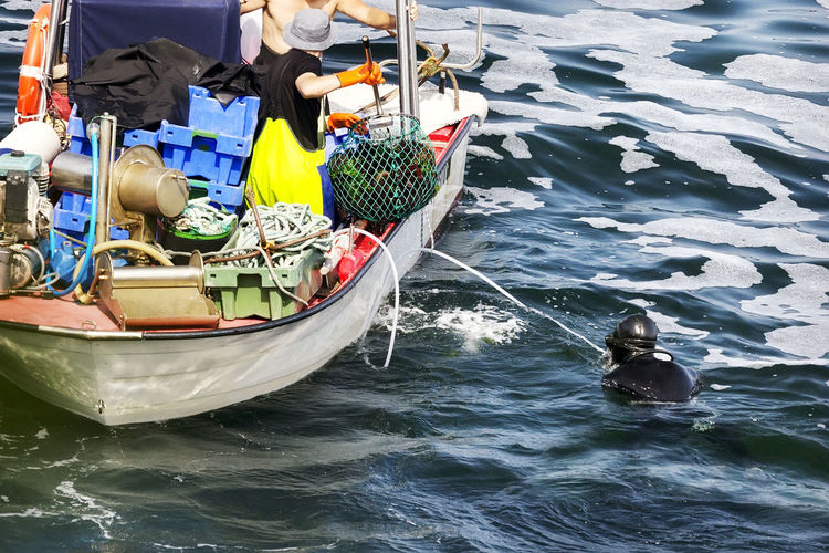 sea urchins extraction by professional divers with boat Urchin Diver Divers Echinoderm Food Fresh Japan Luxury Market Professional Sea Seafarm Seafood Nautical Vessel Moored Sea Urchin Sea Urchins Galicia Galicia Calidade
