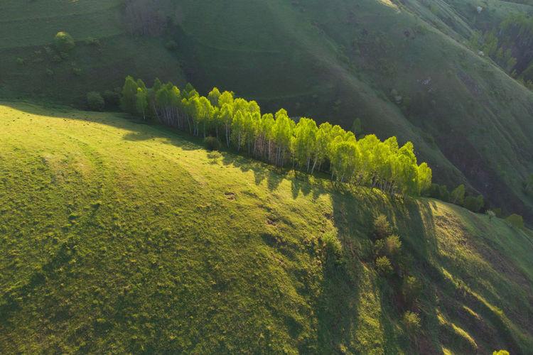 High angle view of plants growing on land
