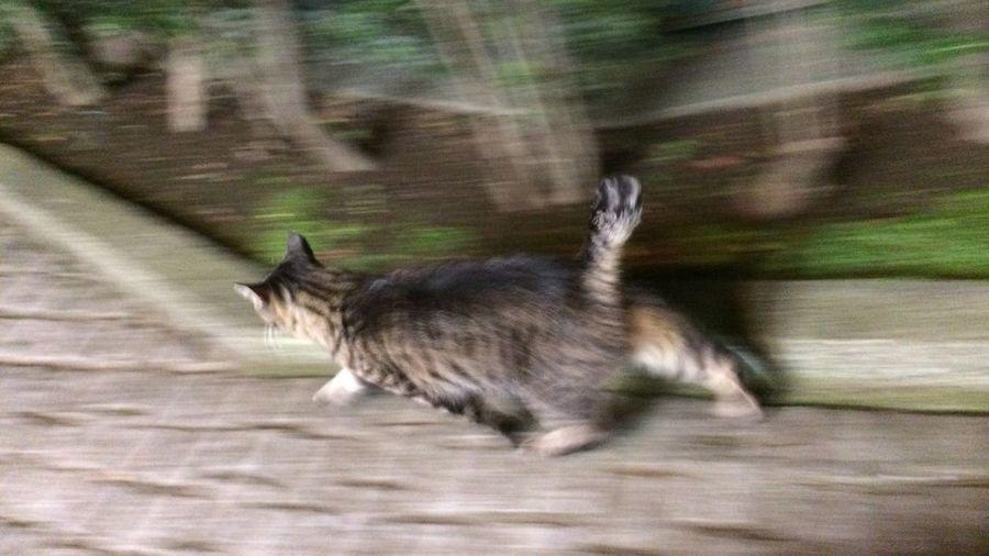 Cat 野良猫 夜ねこ Stray Cat 今日は速いヽ(゚∀゚)ノ!