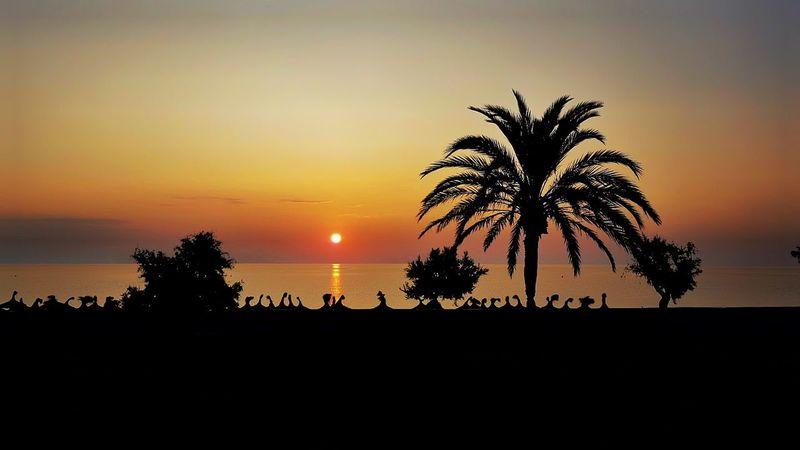 Siluette Siluet Siluetas Tree Palm Tree Sunset Water Sea Silhouette Beach Sky Landscape Horizon Over Water Date Palm Tree