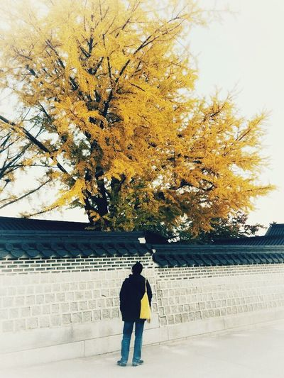 Man standing by tree against sky during autumn