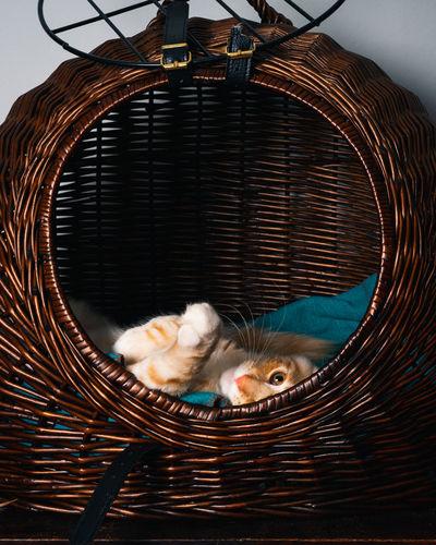 Cat relaxing in basket