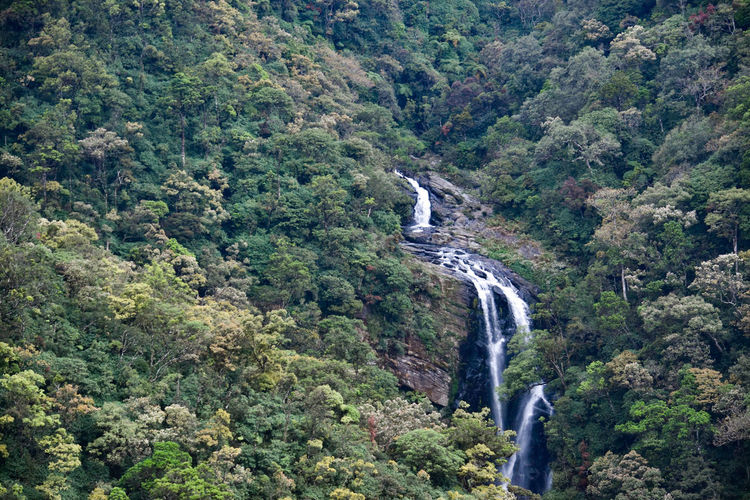beautiful waterfall in central srilanka Forest Mountain Motion High Angle View Green Color Lush - Description Greenery Flowing Water Mountain Road Stream - Flowing Water Long Exposure Flowing Moss Lush Foliage Vegetation Stream Blossoming  Lush Flora Winding Road Green