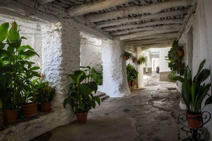 Alpujarras EyeEm Gallery Granada, Spain Arquitecture EyeEm Selects Arquitecturas Bubion Corridor Built Structure Plant Historic
