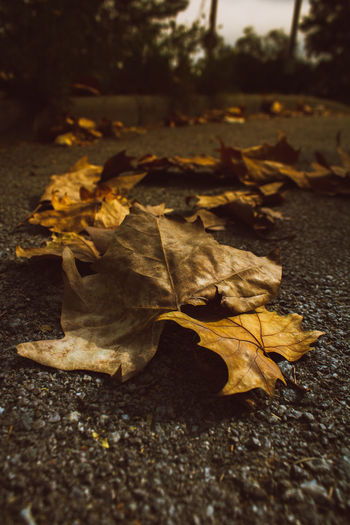 A pile of fallen leaves on hte streets of Barcelona, Spain Autumn Beauty In Nature Change Close-up Day Dry Fallen Fragility Leaf Nature No People Outdoors Selective Focus