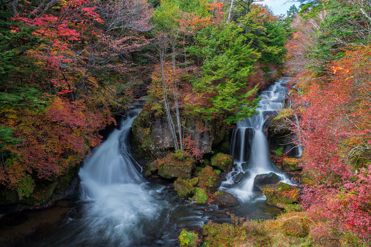 Ryuzu waterfall in beautiful autumn season. Japan Beauty In Nature Blurred Motion Environment Falling Water Flowing Flowing Water Forest Long Exposure Motion Nature Nikkor No People Outdoors Plant Power In Nature Rainforest Rock Rock - Object Ryuzu Scenics - Nature Solid Stream - Flowing Water Tree Waterfall