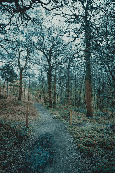 Bare Tree Beauty In Nature Follow The Path Forest Forest Path Growth Idyllic Landscape Lots Of Leaves Nature No People Outdoors Scenics Sky Tall Trees The Way Forward Tranquil Scene Tranquility Tree Tree Trunk Trees WoodLand Woodland Path Woodland Walk