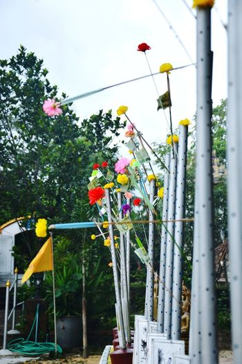 Arts Culture And Entertainment Childhood Sky Tree Low Angle View Day Outdoors Flower Multi Colored No People