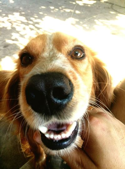 Luky Domestic Animals Dog Fantastic Dog