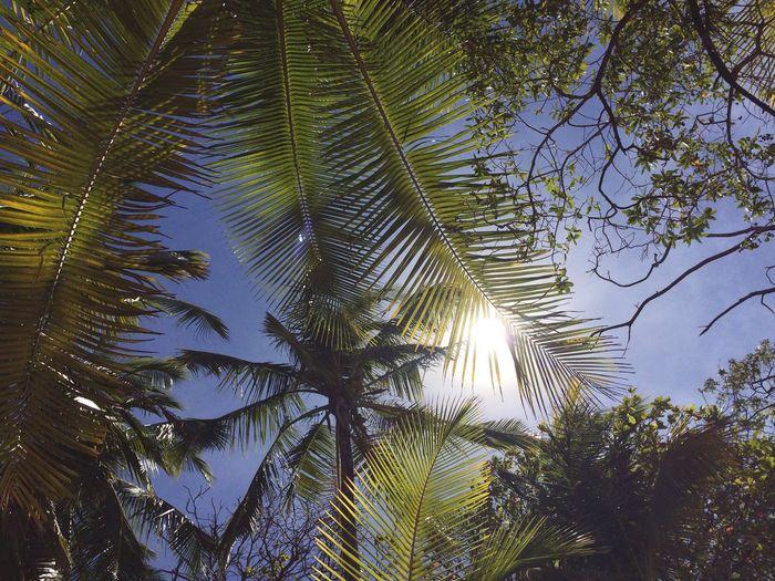 Djungel Jungle