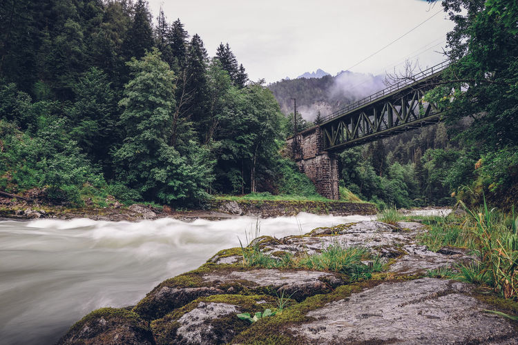 Scenic view of bridge over river in forest