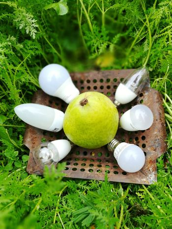 Birnen Energy Efficient Lightbulb Energy Efficient Bulbs Lighting Equipment LED Led Lights  Led Bulb Fruit Social Issues Close-up Grass Green Color Food And Drink Moss
