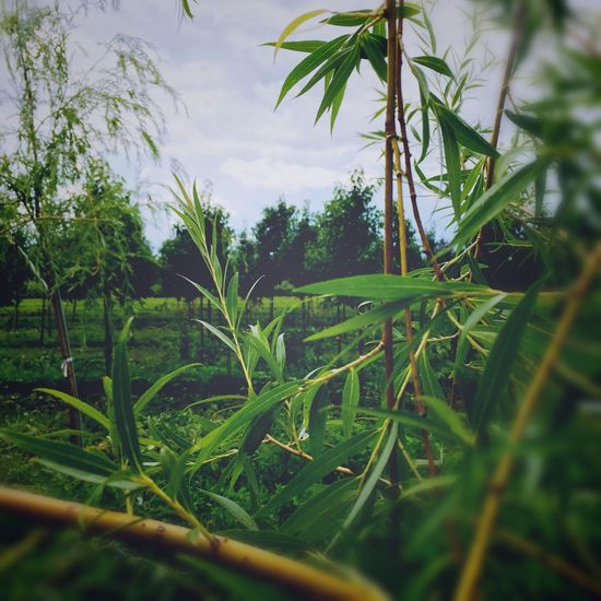 Nature_collection IPhoneography