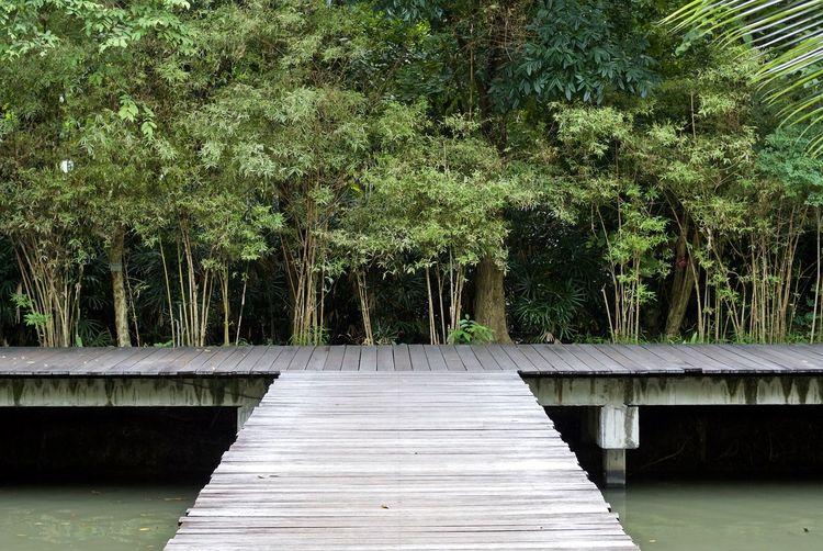 Boardwalk over river