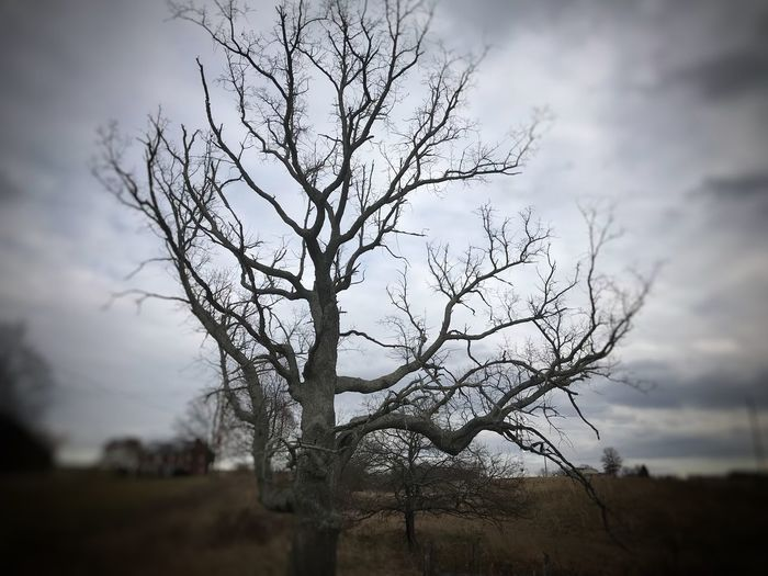 Gnarled Tree Bare Tree Sky Tree Landscape Branch Tranquility Nature Beauty In Nature Outdoors No People