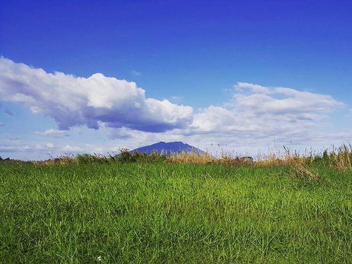 The majestic Mt. Arayat rising beyond the verdant grassfields Wheninpampanga Nature Landscape Mountain Greengrass Blueskies Travelphotography Traluluphilippines