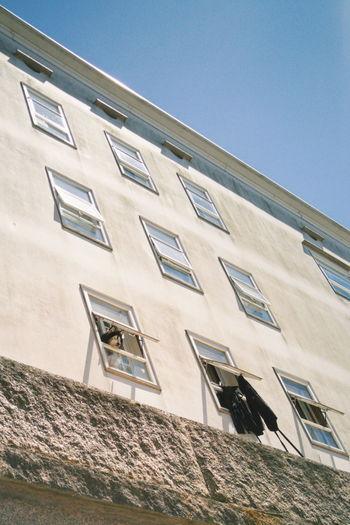 Aquí, viendo la vida pasar - Here, I'm watching life go Dog Muppet Puppy Streetphotography Street Photography Perro Mascota Fotografía Callejera Fotografia De Rua Santiago De Compostela LG G4 Lg G4 Photography Mobile Photography