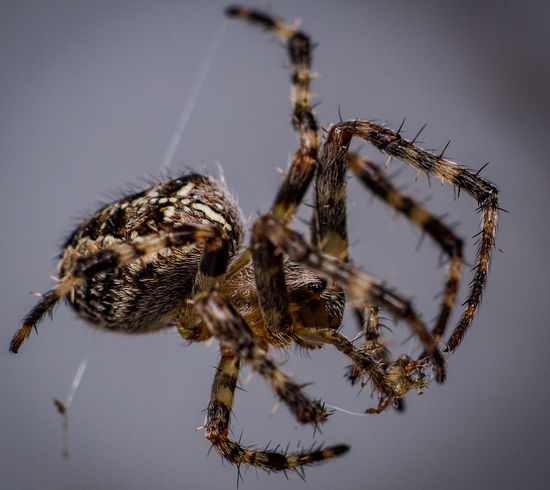 Animal Themes Animal Wildlife Animals In The Wild Close-up Day Nature No People One Animal Outdoors Prey Spider